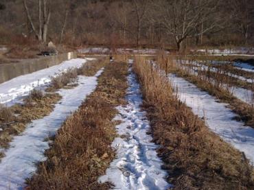 Календарь садово-огородных работ. Март.