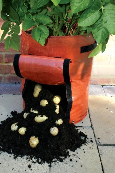 Оригинальные способы посадки картофеля